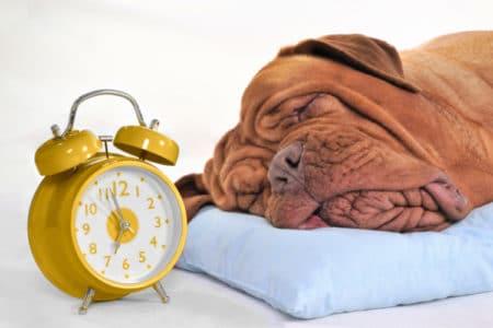 Adjusting Your Pet to Daylight Saving Time