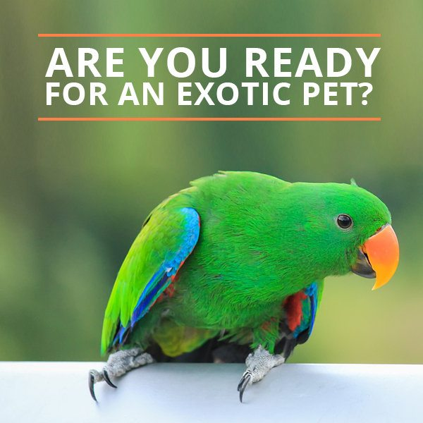 Are You Ready for an Exotic Pet