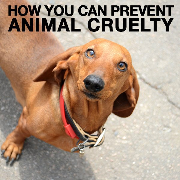 How You Can Prevent Animal Cruelty