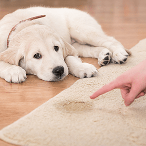 How to Remove Pet Urine Odors