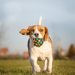 National Pet Day – 5 Ways to Pamper Your Pet