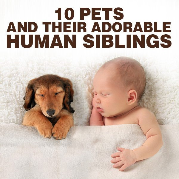 10 Pets and Their Adorable Human Siblings