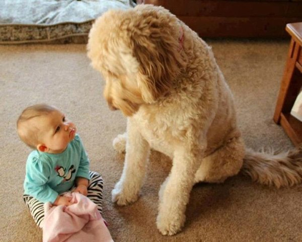 10 Pets and Their Adorable Human Siblings 005