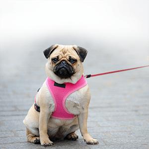 5 Reasons a Leash Keeps Your Dog Safe