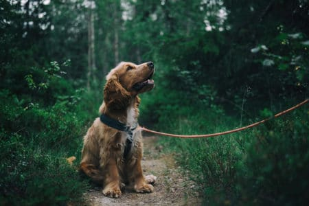 5 Reasons a Leash Keeps Your Dog Safe