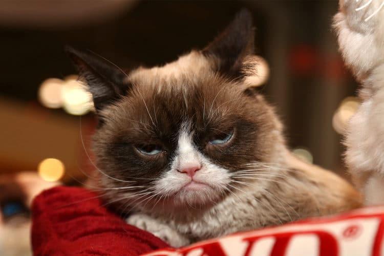 9-Best-Grumpy-Cat-Memes-750x500.jpg