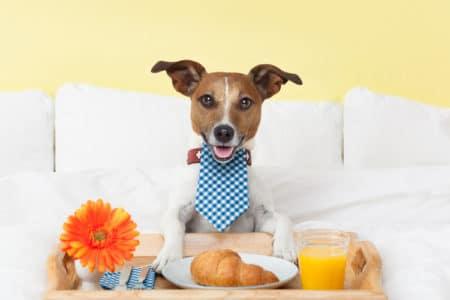 Entrepreneurs Cashing In on Pet Startups