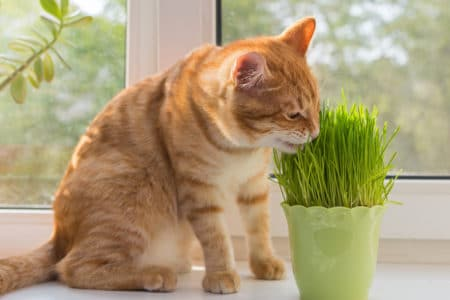 How to Grow Catnip for Your Furry Feline