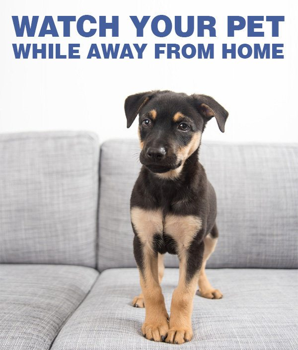 Watch Your Pet While Away From Home