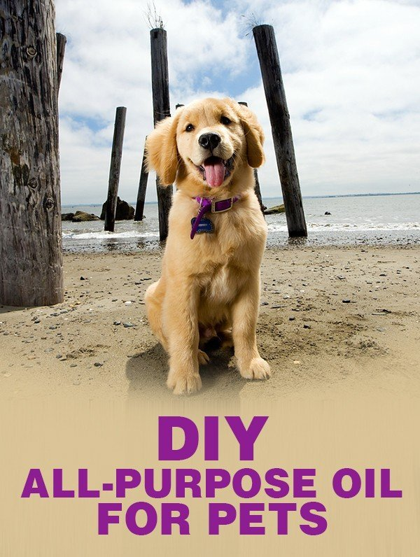 DIY All Purpose Oil for Pets