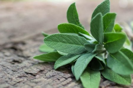 10 Healing Herbal Remedies
