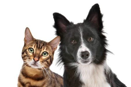 5 Natural Flea and Tick Remedies for Your Pet