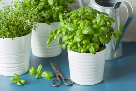 Want to Start an Indoor Herb Garden? We'll Show You How!