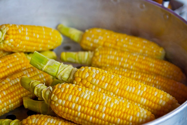 fall vegetable corn