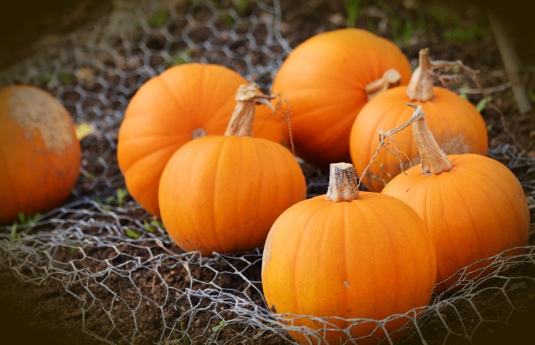 pumpkins healthy fall foods